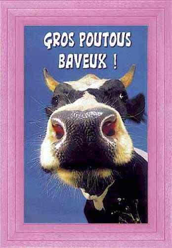Nos amis les ours Vache1016
